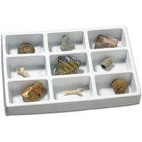 Educational Insights Kit paleontologie - Fosile
